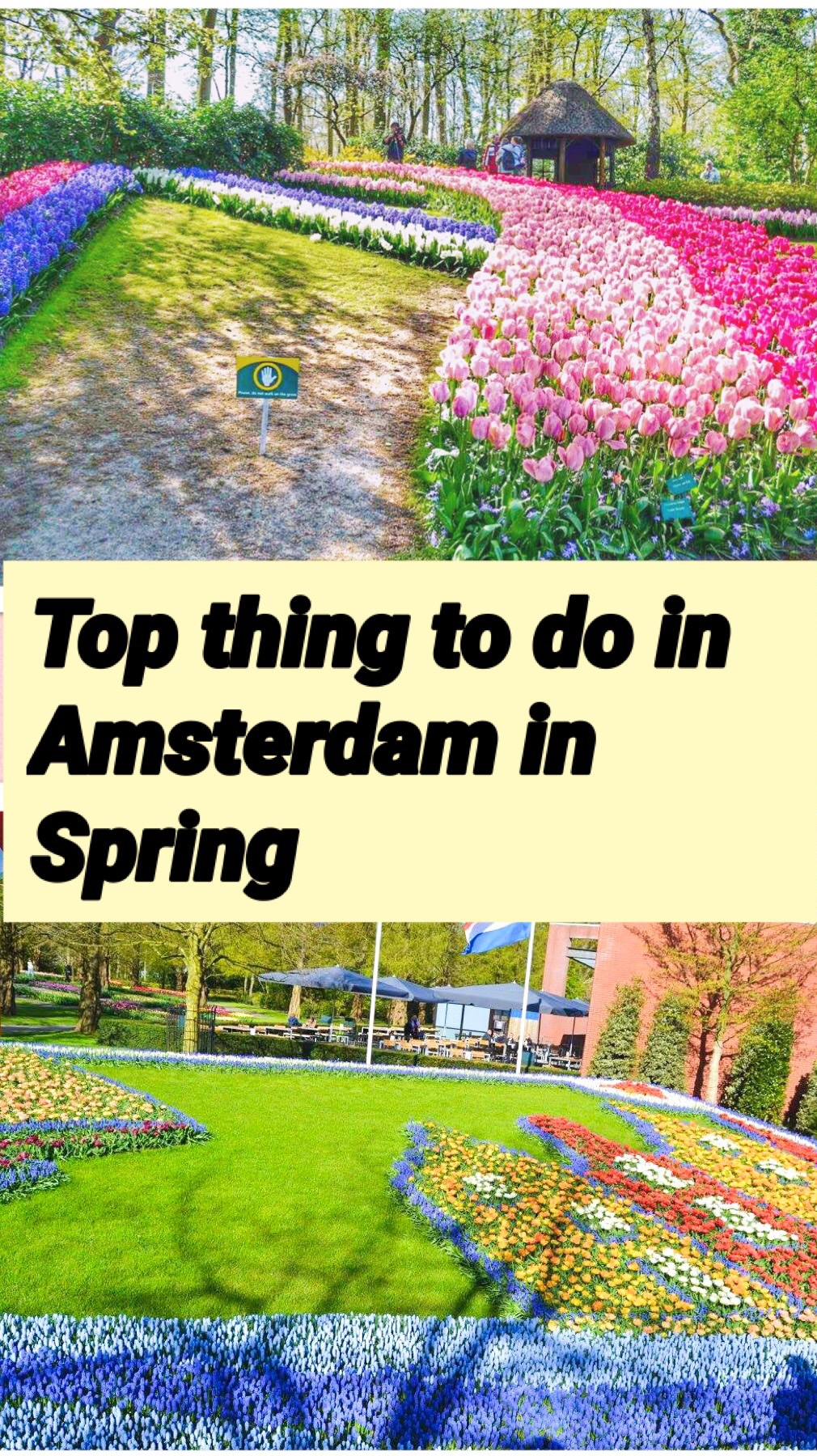 Top thing to do in Amsterdam in Spring