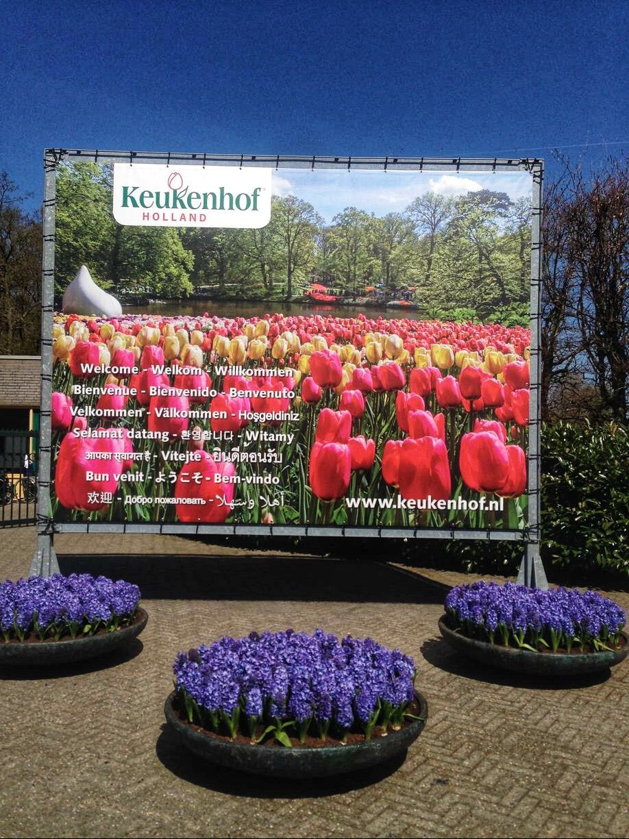 How to visit Keukenhof on a layover